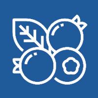heidelbeeren-icon